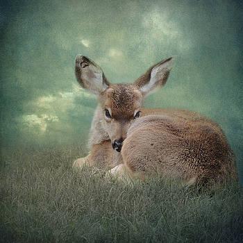 Watchful Eye by Sally Banfill