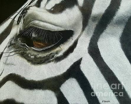 Watchful Eye  by Sheryl Unwin