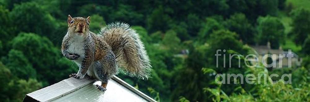 Watchful squirrel by C Lythgo