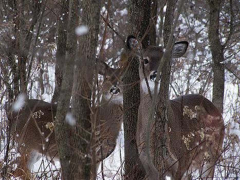 Scott Hovind - Watching Nature Watching Me