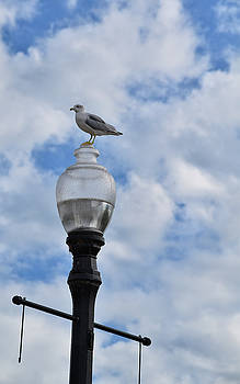 Watching Over Port Elgin by Maria Keady