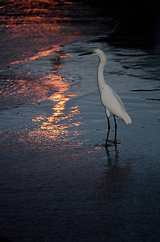 Watching the Sunset by Melissa Lane