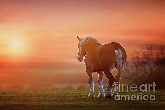 Watching the Sunset by Tamyra Ayles
