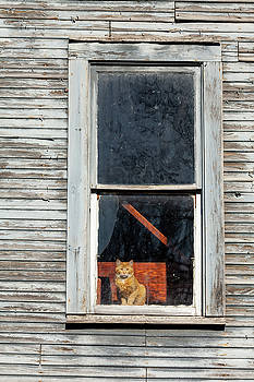 Watching the World Go By by Fran Riley