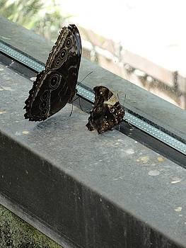 Brown Black Butterflies Watching Wondering by Mozelle Beigel Martin