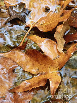 Water and Leaves by Robert Ball