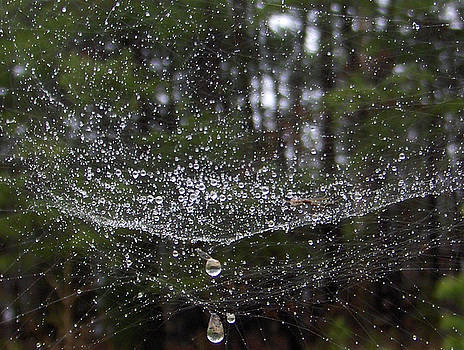 Water And Web by Curt Curt
