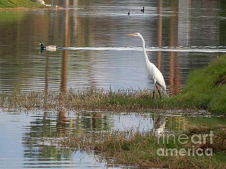 Water Birds by Chris Tarpening