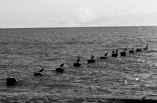 Water Birds by Michelle Hoffmann