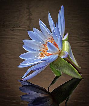 Water Bloom by Robert Pilkington