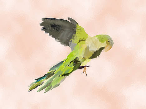 Water Color Parrot  by S A