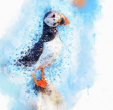 Water Colour Puffin by Jim Hatch