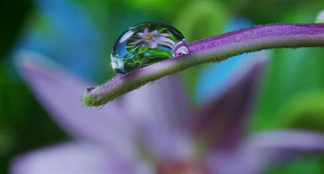 Water Droplet by Digital Art Cafe