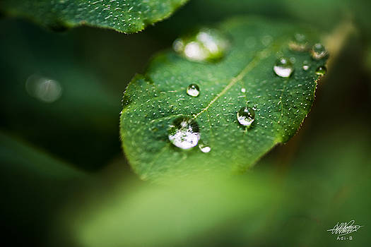 Water Droplets by Adnan Bhatti
