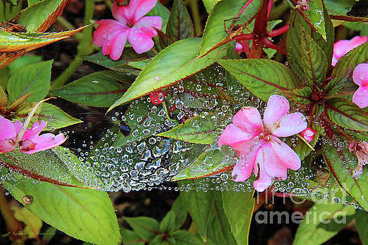 Water Drops by Inspirational Photo Creations Audrey Woods