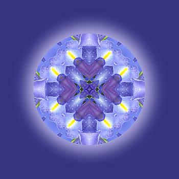 Water Drops Mandala by Jorge Gomez