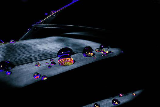 Water drops by Mariia Sorokina