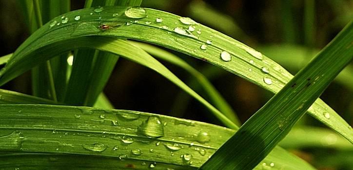 Water drops by Mario Brenes Simon