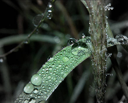 Karen Musick - Water Drops on Grass