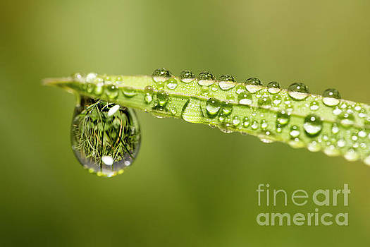 Water drops on the grass by Odon Czintos