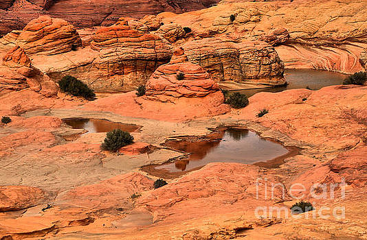 Adam Jewell - Water In The Petrified Sand Dunes