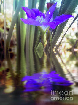 Water Iris Reflections by Elaine Teague