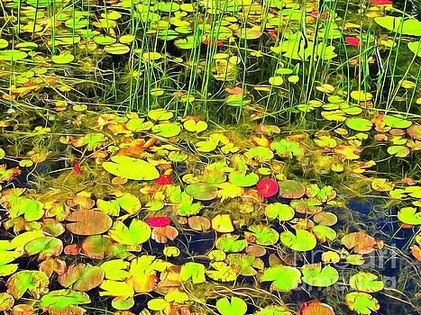 Water-lilie Island by Helene Guertin