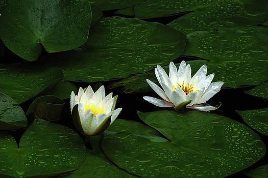 Edward Sobuta - Water Lilies
