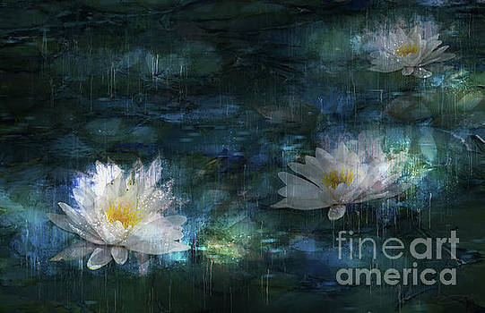 Water Lilies in the Rain by Shanina Conway
