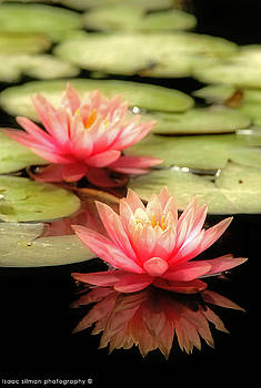 Water Lilies by Isaac Silman