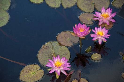 Water Lilies by Kirk Sewell