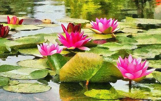 Water Lilies by Maciek Froncisz