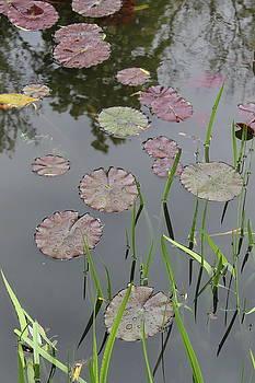 Water lilies by Maria Preibsch