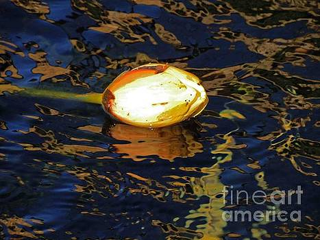 Water Lilly Bud  by David Frederick