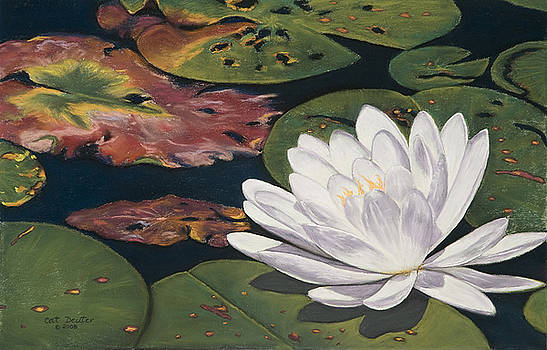 Water Lilly by Cat Deuter
