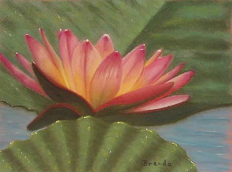 Water Lily 1 by Brenda Maas