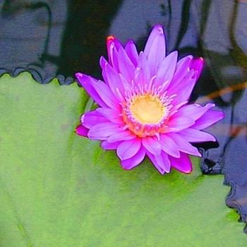 Water Lily by Richard Nodine