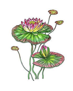 Water Lily Botanical Watercolor  by Irina Sztukowski