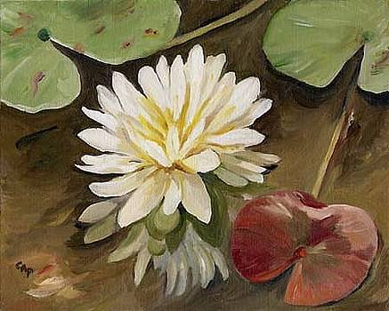 Water Lily by Cheryl Pass
