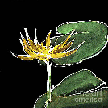 Water Lily-Dark Yellow by Chris Paschke