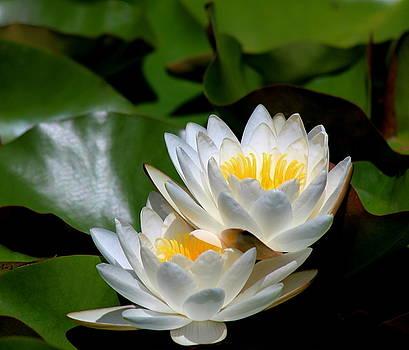 Rosanne Jordan - Water Lily Duet