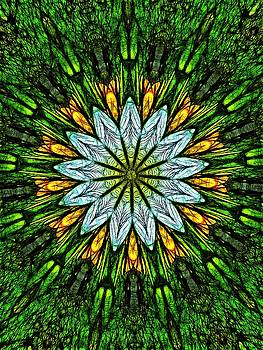 Water Lily Fractal by Nick Heap