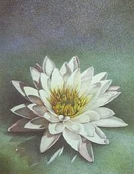 Water Lily I by Bonnie Haversat