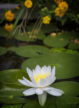 Ricky Barnard - Water Lily III
