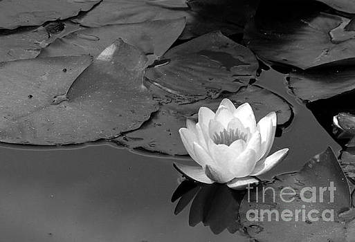 Water Lily by Rick Wheeler