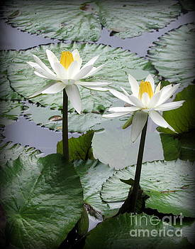 Water Lily on Oahu by Joy Patzner
