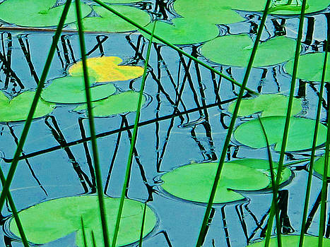 Water Lily Pads by Lynn Harrison