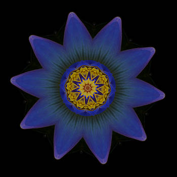 Water Lily Purple by Stephanie Maatta Smith