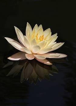 Sabrina L Ryan - Water Lily Reflected