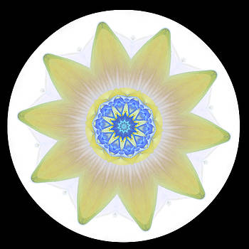 Water Lily Yellow by Stephanie Maatta Smith